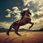 the-best-top-desktop-horse-wallpapers-25resized